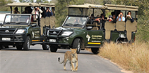Day Excurtions to Hoodspruit Endangered Species Centre with Echo Africa