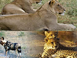 South Africa Tours, Tours Kruger Park, Day tours Mpumalanga, Day tours Swaziland
