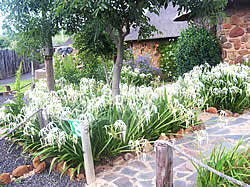 Lydenburg Accommodation - Lydenburg Self catering - Klitzgras Chalets - Klitzgras Self catering accommodation