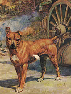 Jock of the Bushveld  The famous dog of Sir Percy FitzPatrick whose adventures are told in the book with the same name